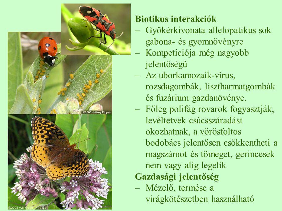 Biotikus interakciók Gyökérkivonata allelopatikus sok gabona- és gyomnövényre. Kompetíciója még nagyobb jelentőségű.