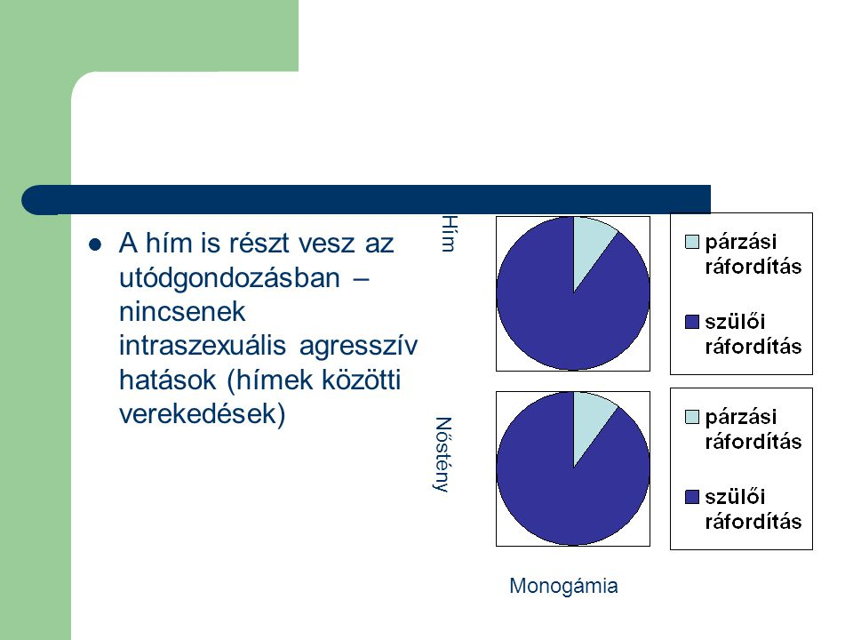 A hím is részt vesz az utódgondozásban – nincsenek intraszexuális agresszív hatások (hímek közötti verekedések)