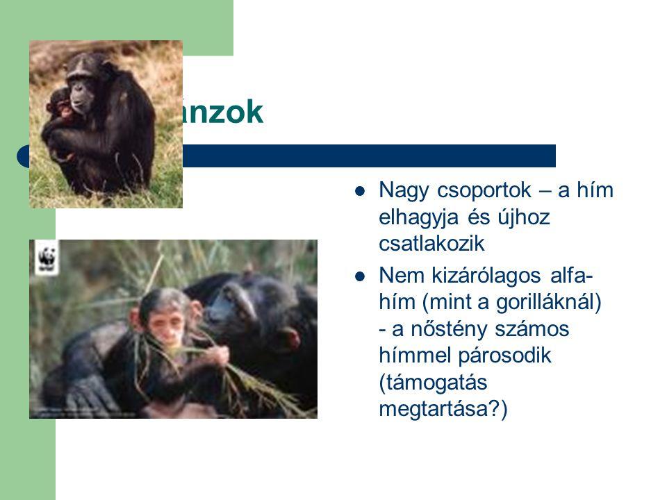 Csimpánzok Nagy csoportok – a hím elhagyja és újhoz csatlakozik