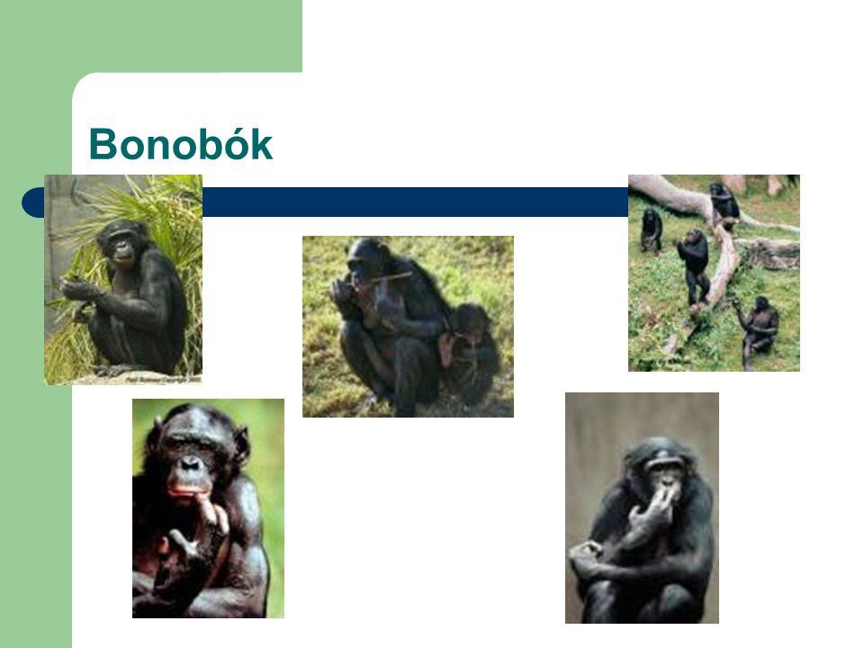 Bonobók