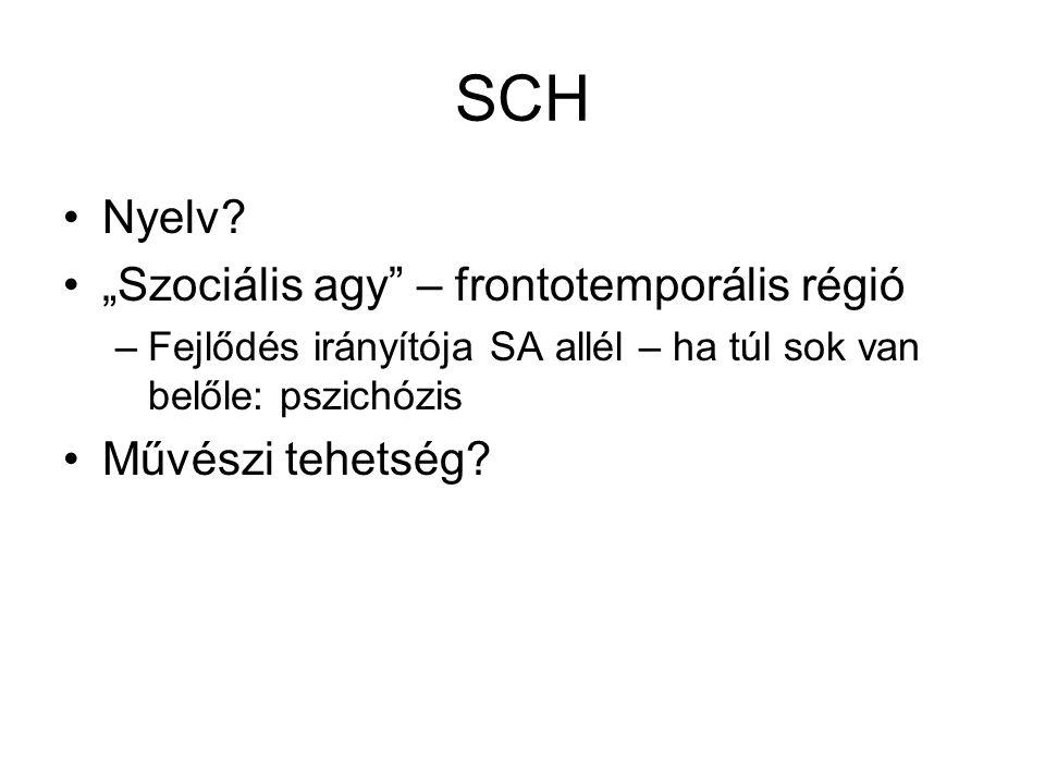 """SCH Nyelv """"Szociális agy – frontotemporális régió Művészi tehetség"""