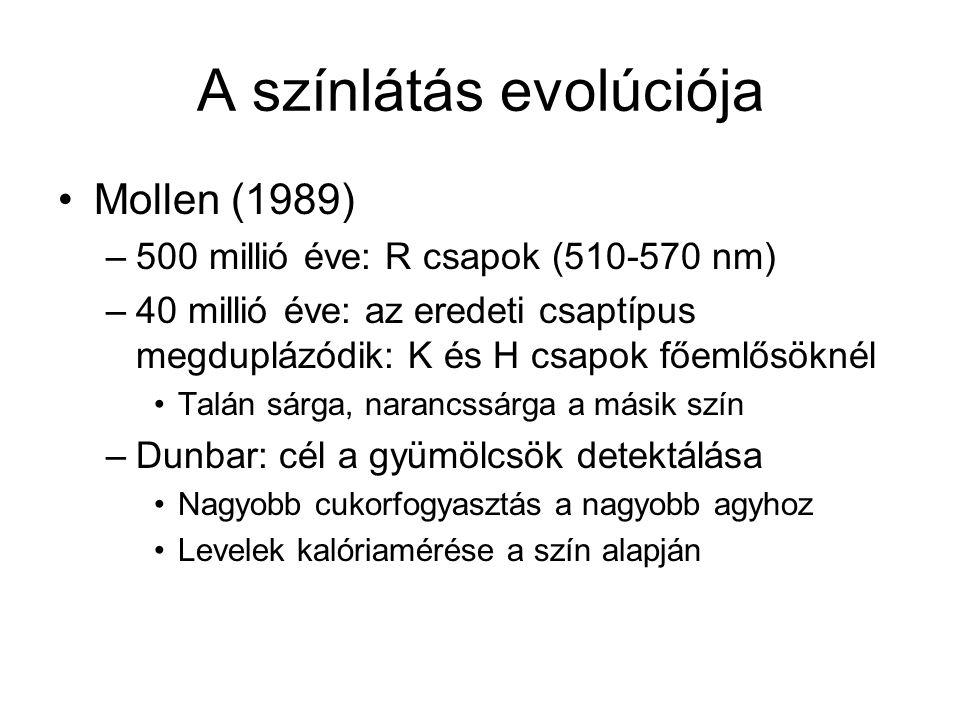 A színlátás evolúciója