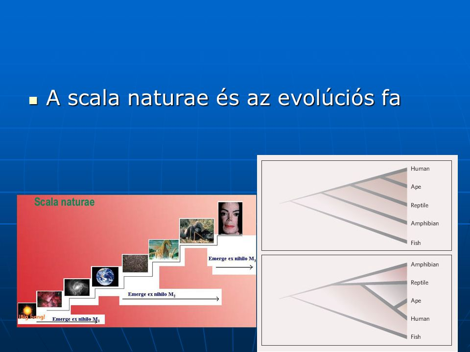 A scala naturae és az evolúciós fa