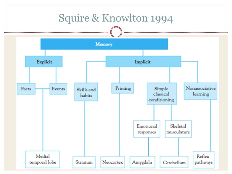 Squire & Knowlton 1994