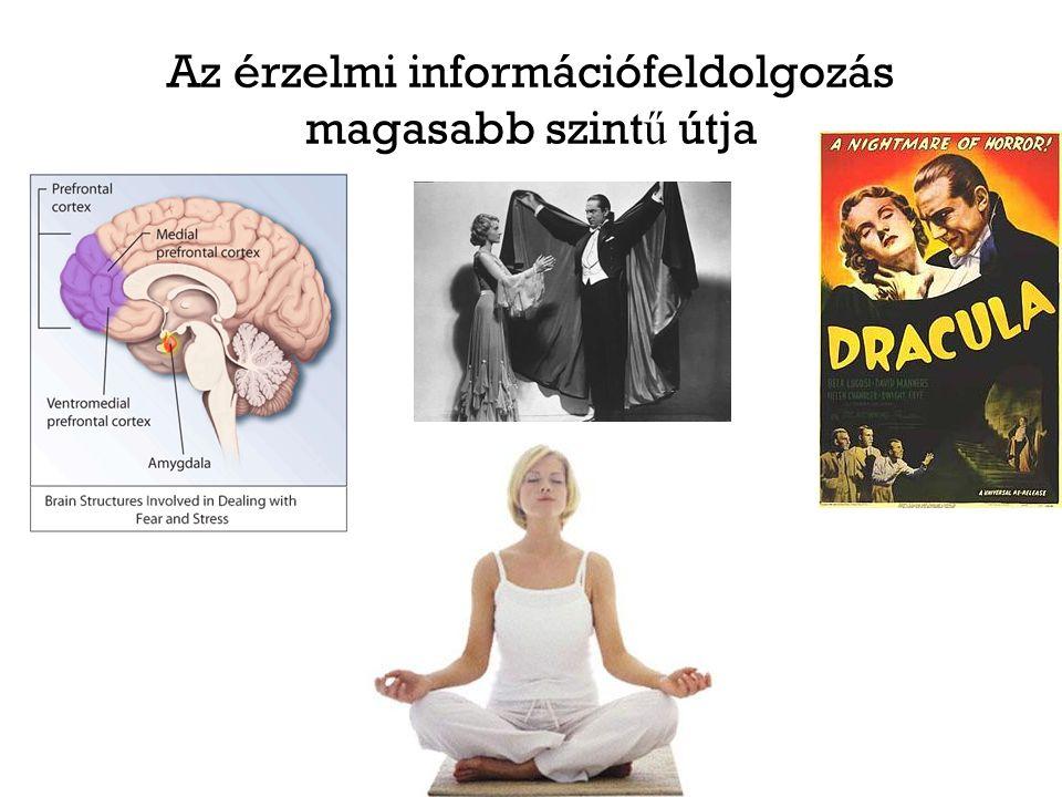 Az érzelmi információfeldolgozás magasabb szintű útja