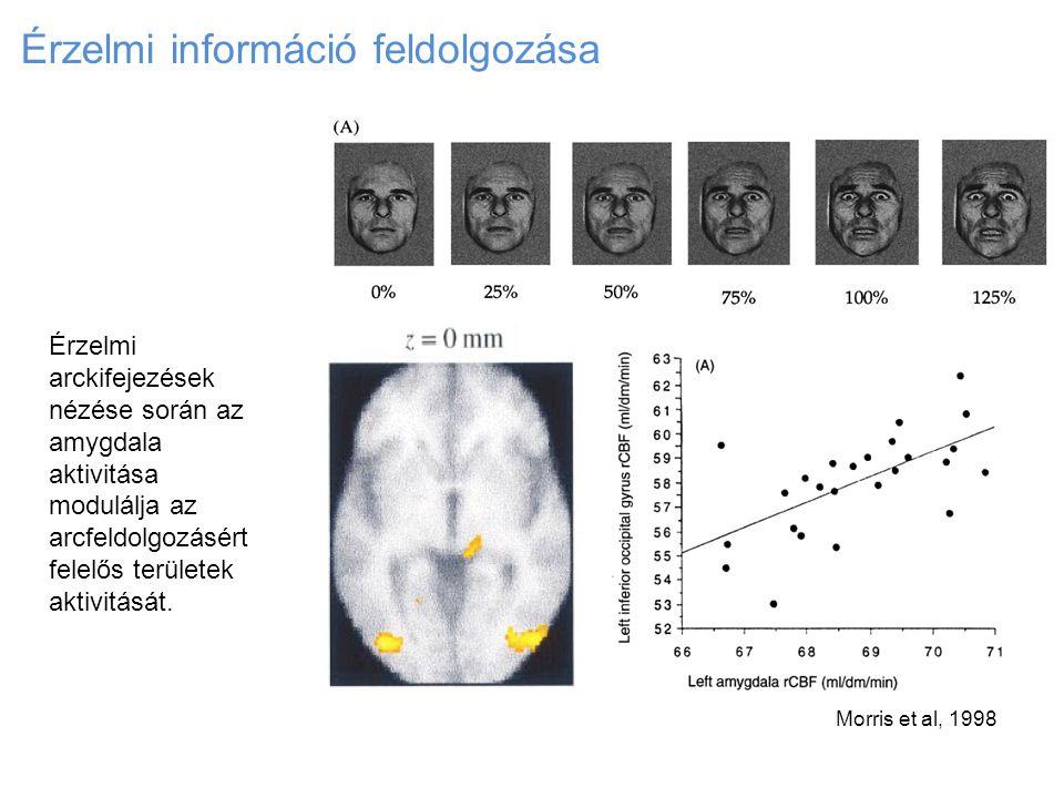 Érzelmi információ feldolgozása