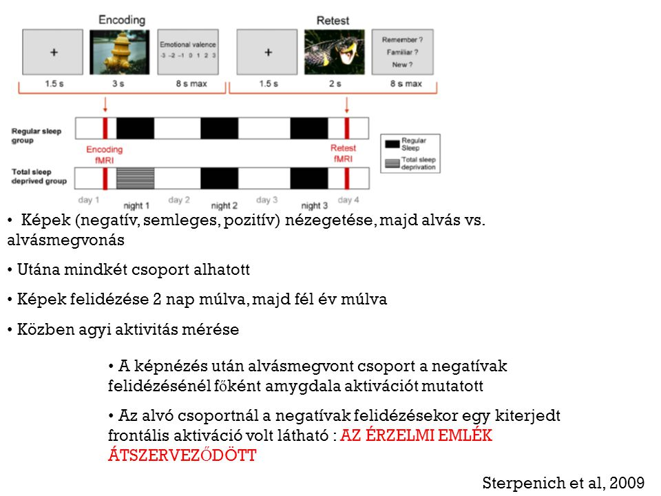 Képek (negatív, semleges, pozitív) nézegetése, majd alvás vs