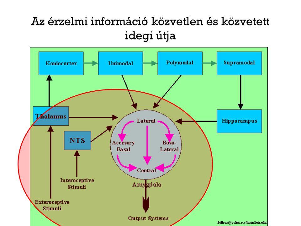 Az érzelmi információ közvetlen és közvetett idegi útja