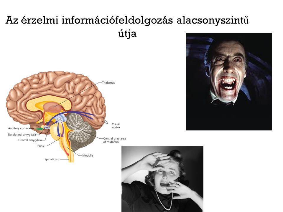 Az érzelmi információfeldolgozás alacsonyszintű útja