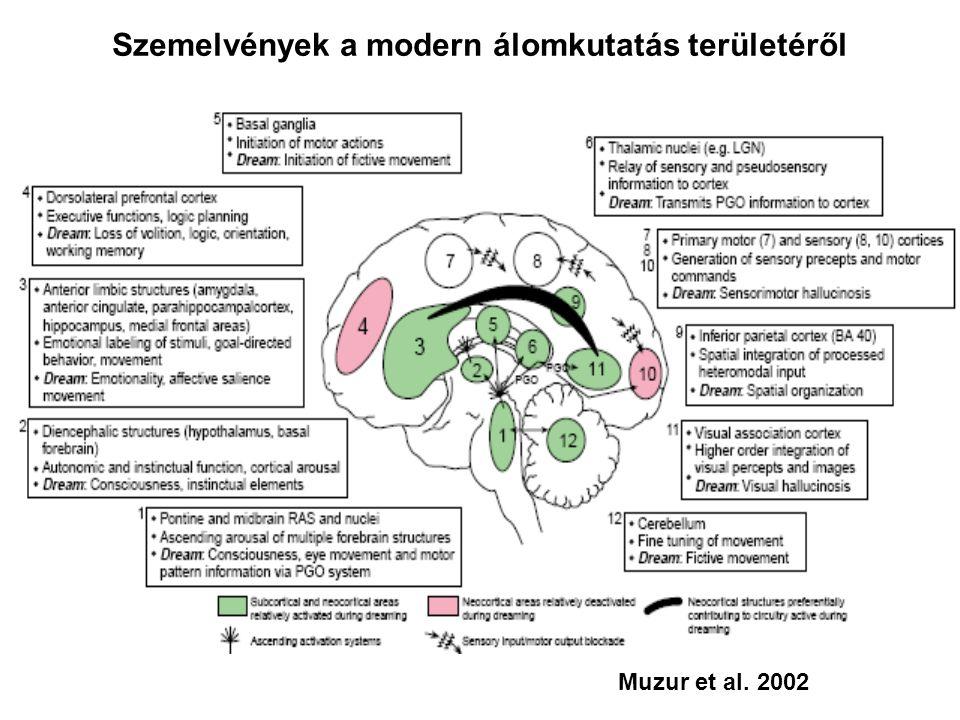 Szemelvények a modern álomkutatás területéről