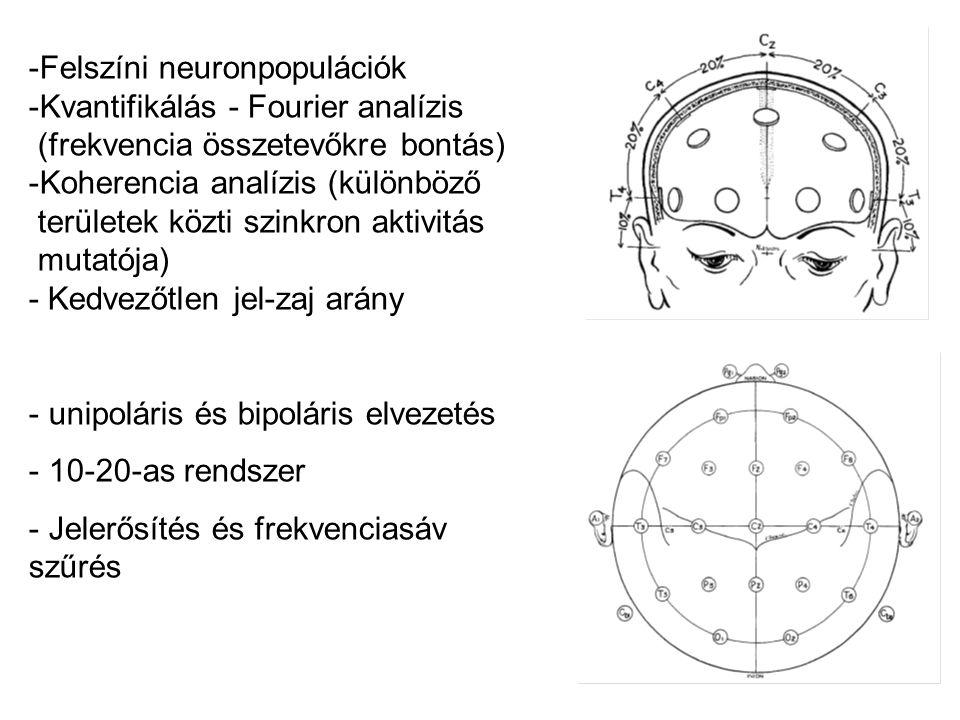Felszíni neuronpopulációk
