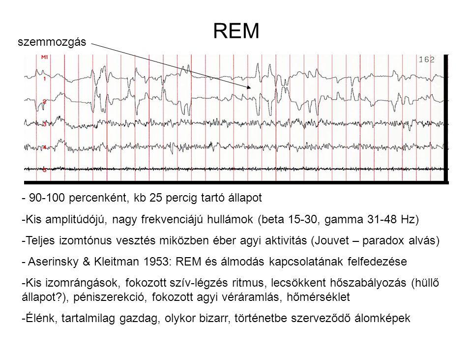 REM szemmozgás 90-100 percenként, kb 25 percig tartó állapot