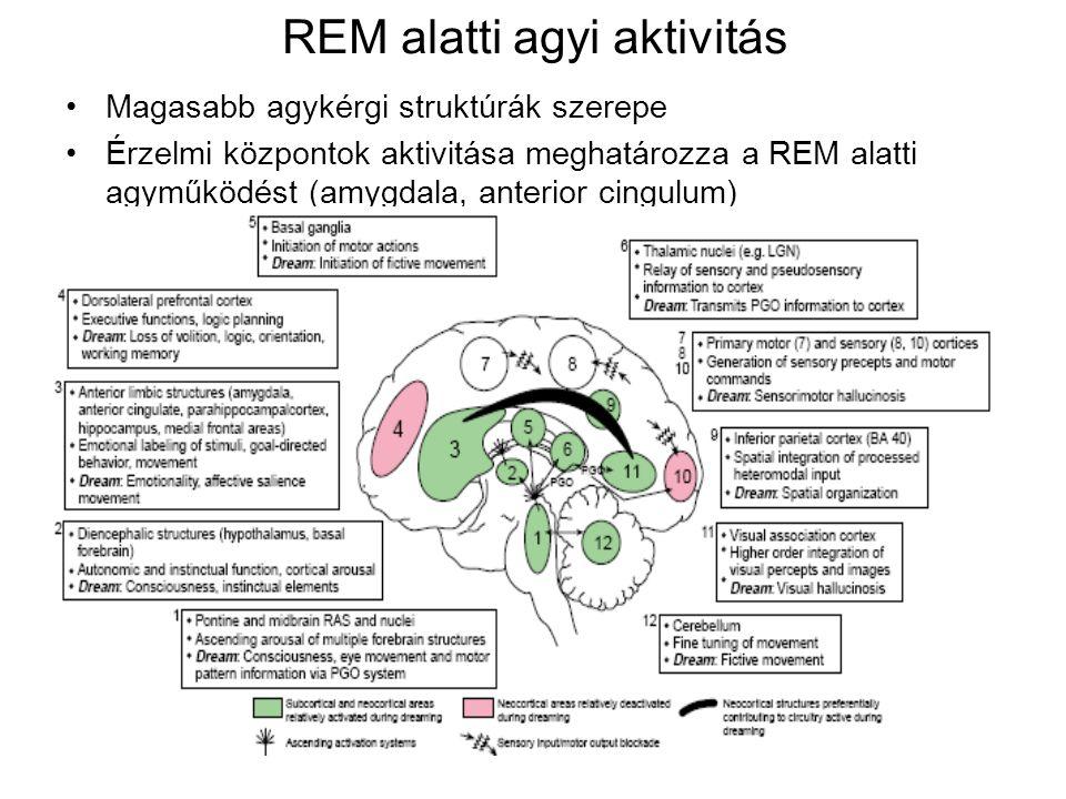 REM alatti agyi aktivitás