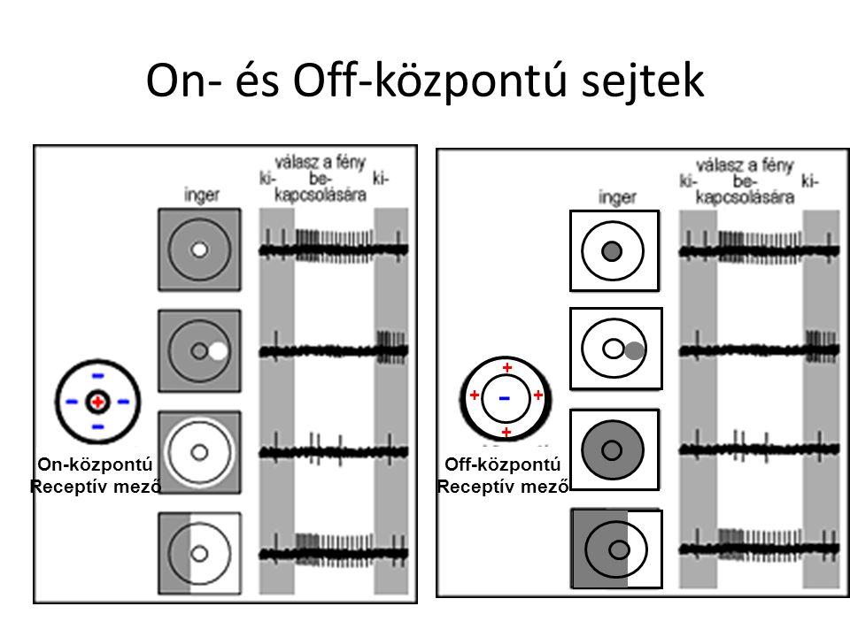 On- és Off-központú sejtek