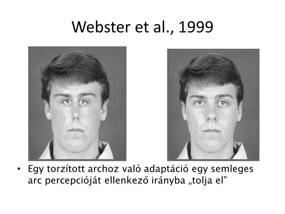 """Webster et al., 1999 Egy torzított archoz való adaptáció egy semleges arc percepcióját ellenkező irányba """"tolja el"""