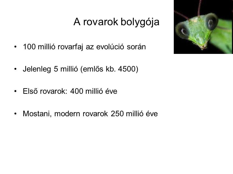 A rovarok bolygója 100 millió rovarfaj az evolúció során