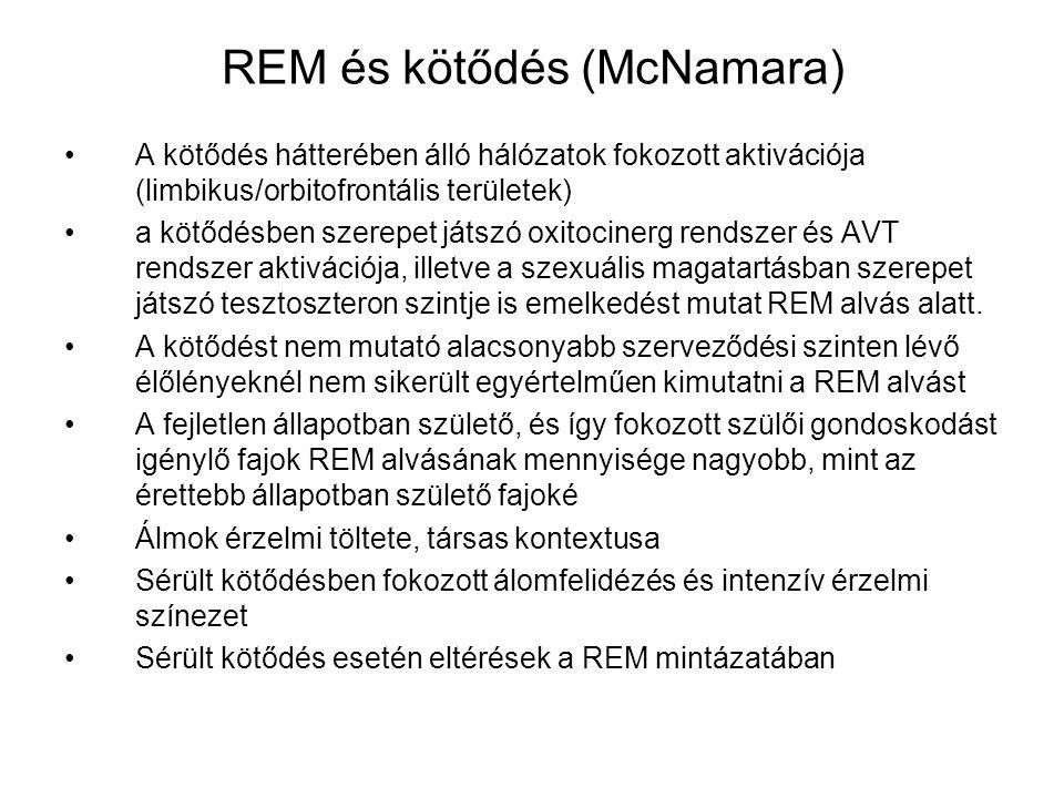 REM és kötődés (McNamara)