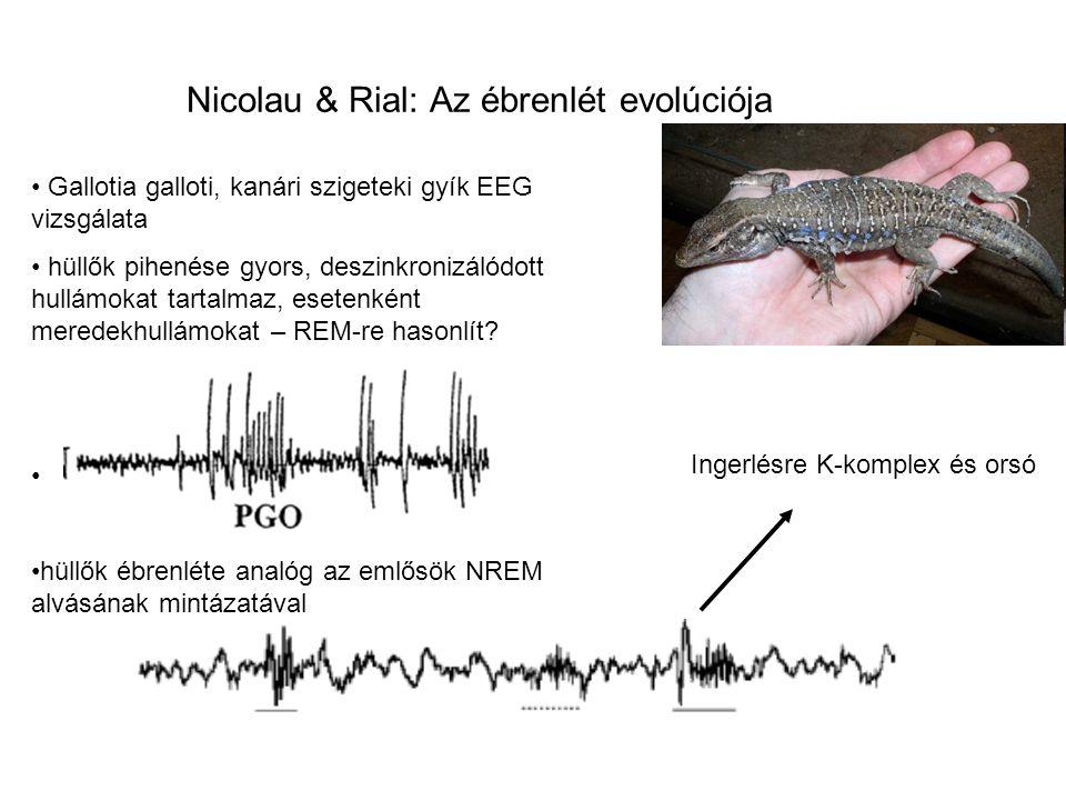 Nicolau & Rial: Az ébrenlét evolúciója