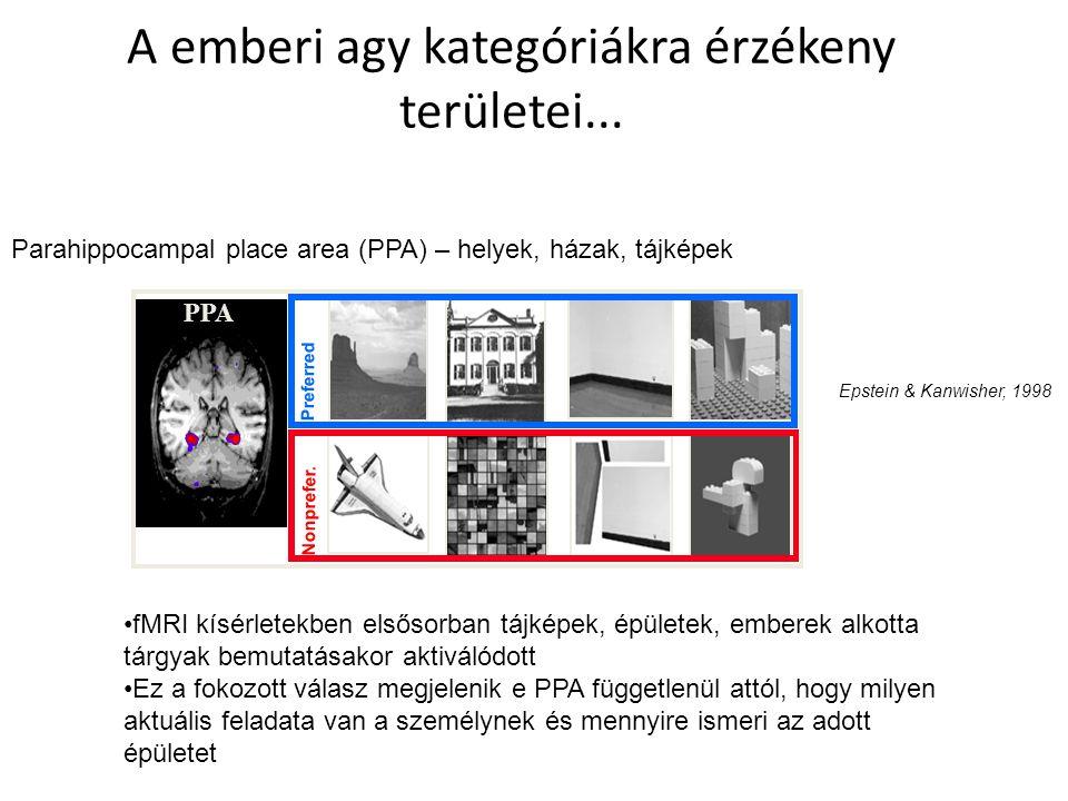 A emberi agy kategóriákra érzékeny területei...