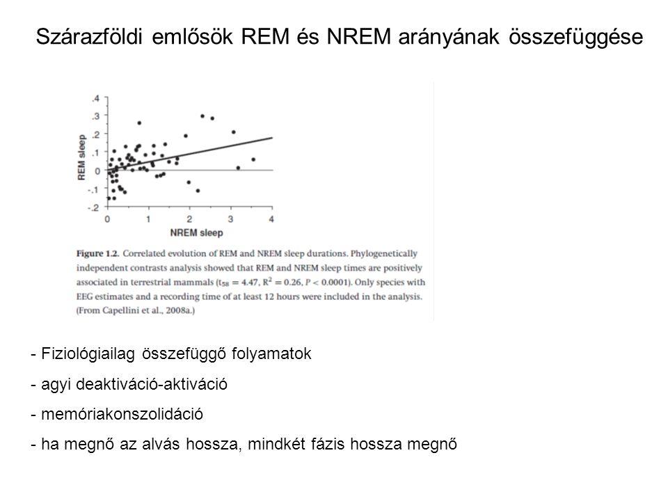 Szárazföldi emlősök REM és NREM arányának összefüggése