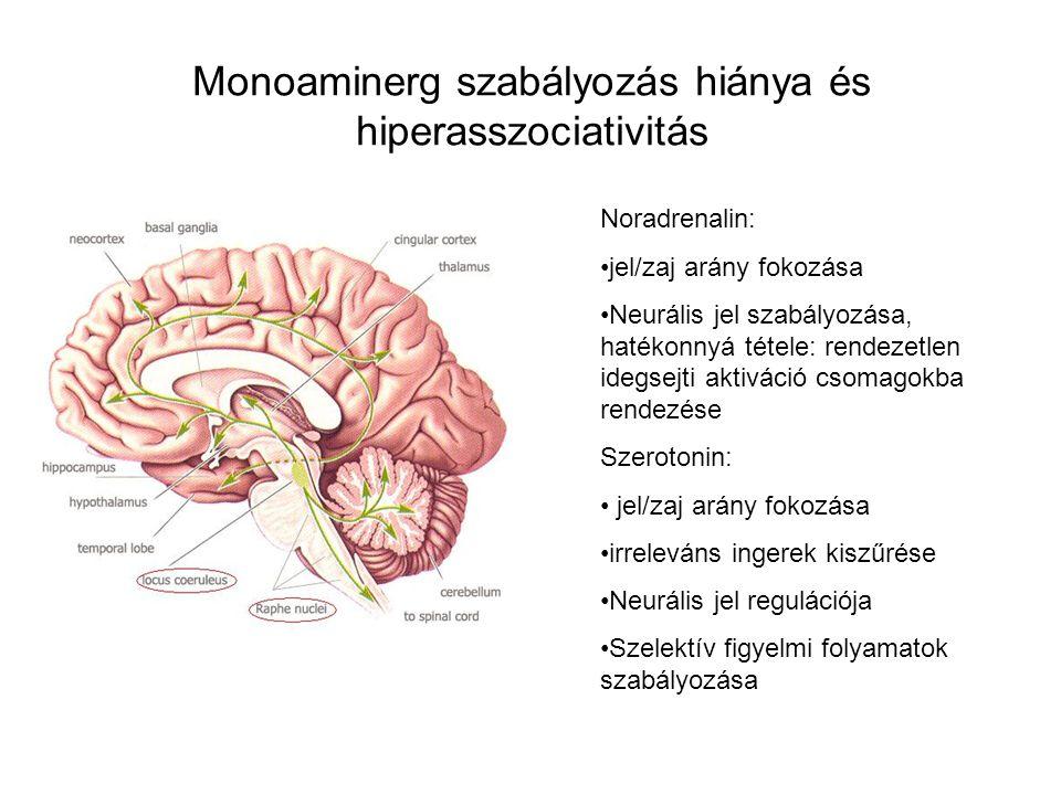Monoaminerg szabályozás hiánya és hiperasszociativitás