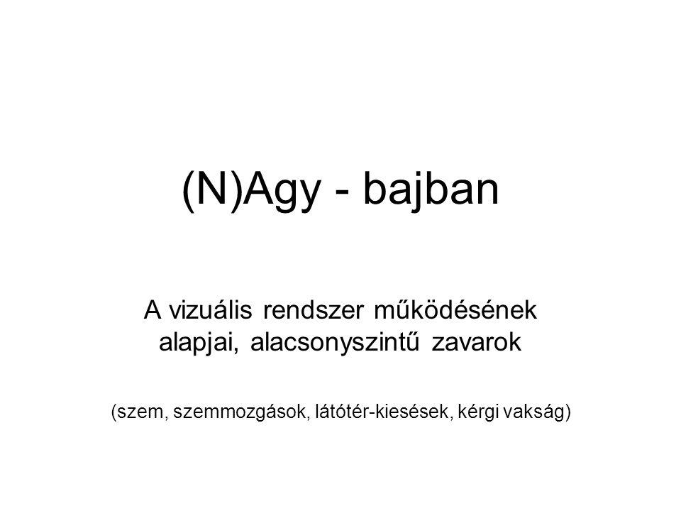 (N)Agy - bajban A vizuális rendszer működésének alapjai, alacsonyszintű zavarok.