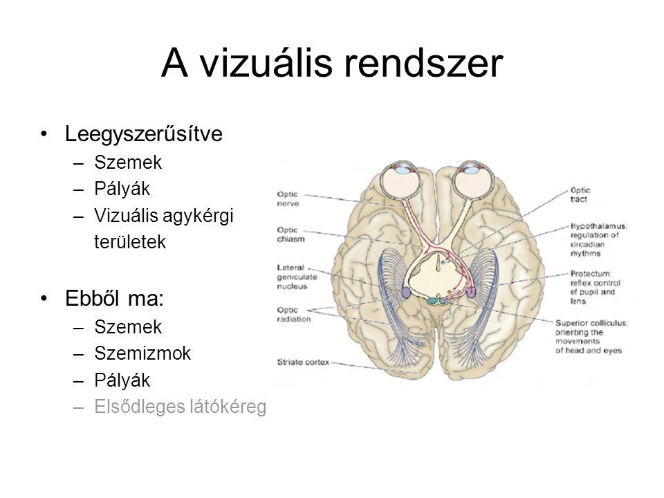 A vizuális rendszer Leegyszerűsítve Ebből ma: Szemek Pályák