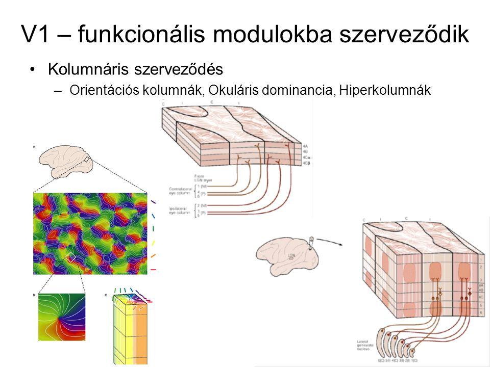 V1 – funkcionális modulokba szerveződik