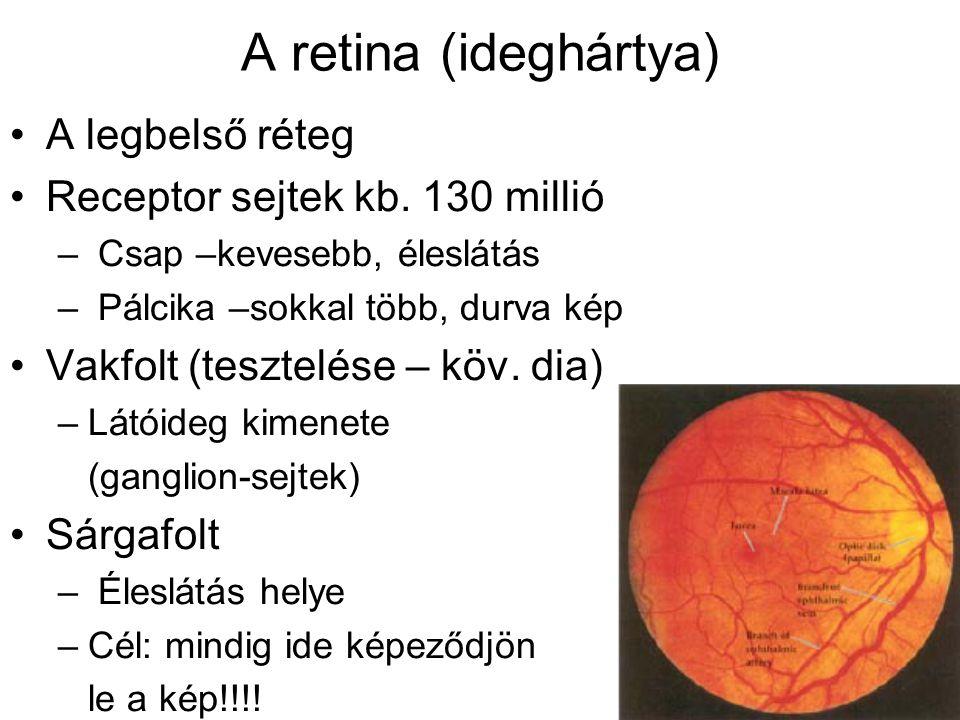 A retina (ideghártya) A legbelső réteg Receptor sejtek kb. 130 millió