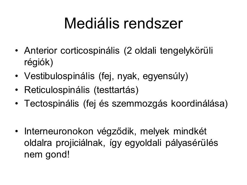 Mediális rendszer Anterior corticospinális (2 oldali tengelykörüli régiók) Vestibulospinális (fej, nyak, egyensúly)