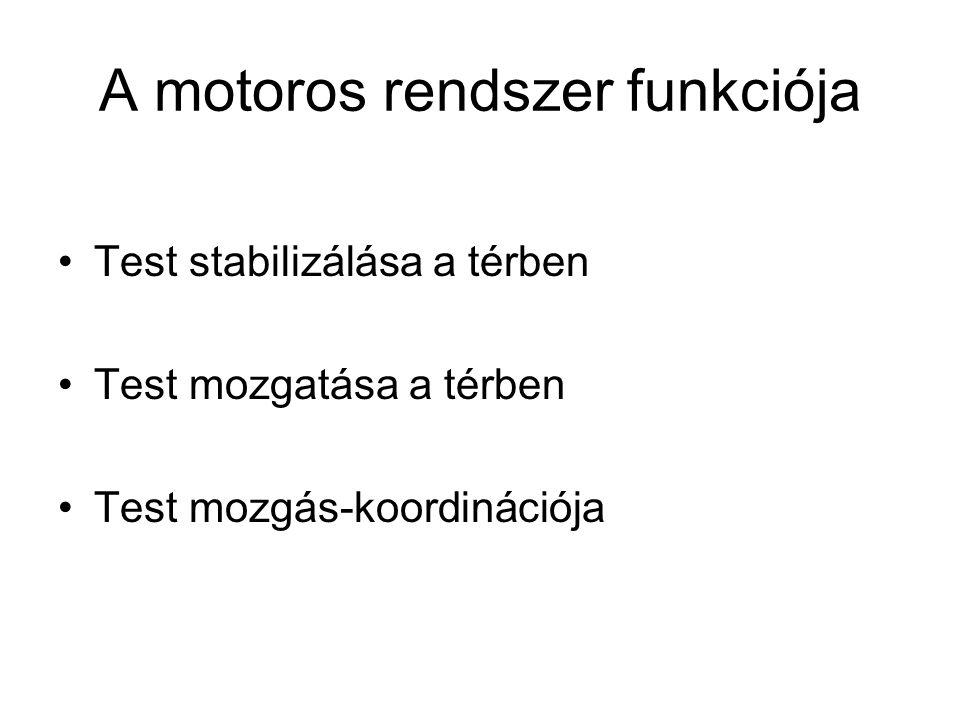A motoros rendszer funkciója