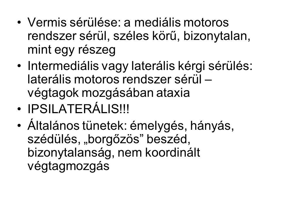 Vermis sérülése: a mediális motoros rendszer sérül, széles körű, bizonytalan, mint egy részeg