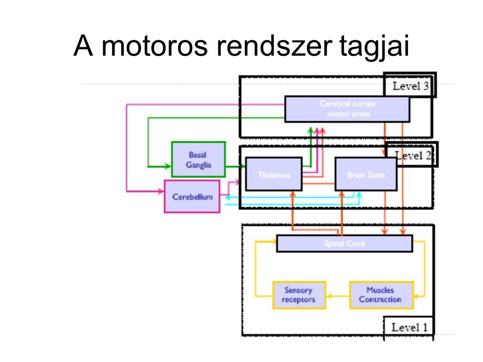 A motoros rendszer tagjai