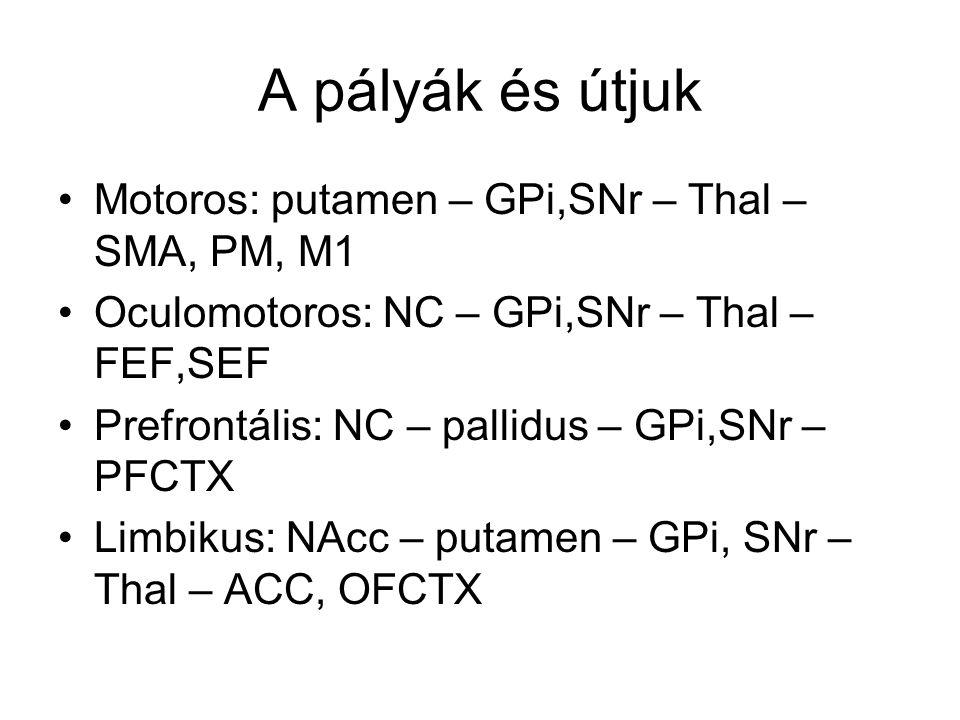 A pályák és útjuk Motoros: putamen – GPi,SNr – Thal – SMA, PM, M1