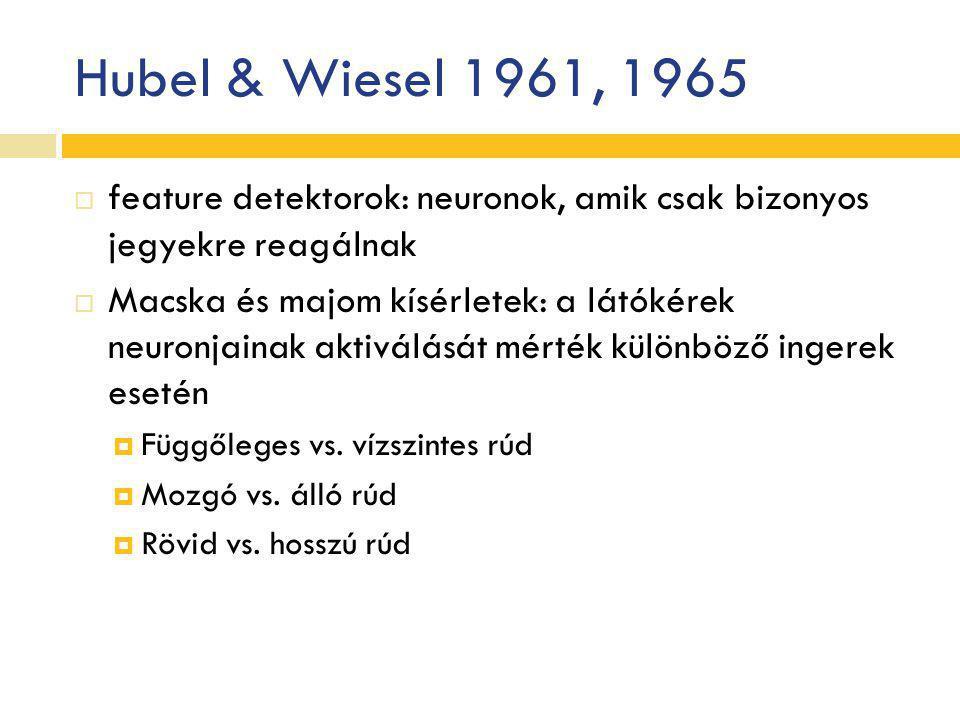 Hubel & Wiesel 1961, 1965 feature detektorok: neuronok, amik csak bizonyos jegyekre reagálnak.