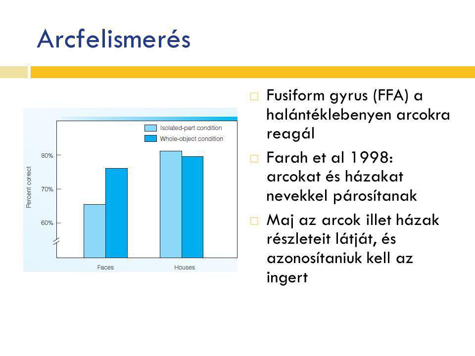 Arcfelismerés Fusiform gyrus (FFA) a halántéklebenyen arcokra reagál