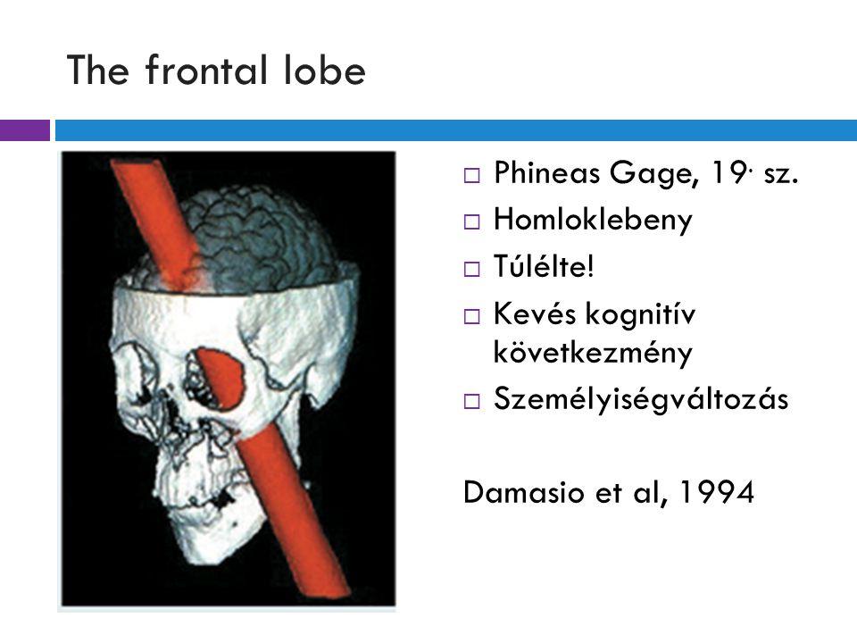 The frontal lobe Phineas Gage, 19. sz. Homloklebeny Túlélte!