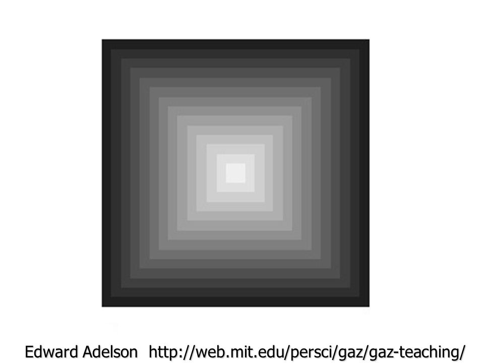 Edward Adelson http://web.mit.edu/persci/gaz/gaz-teaching/