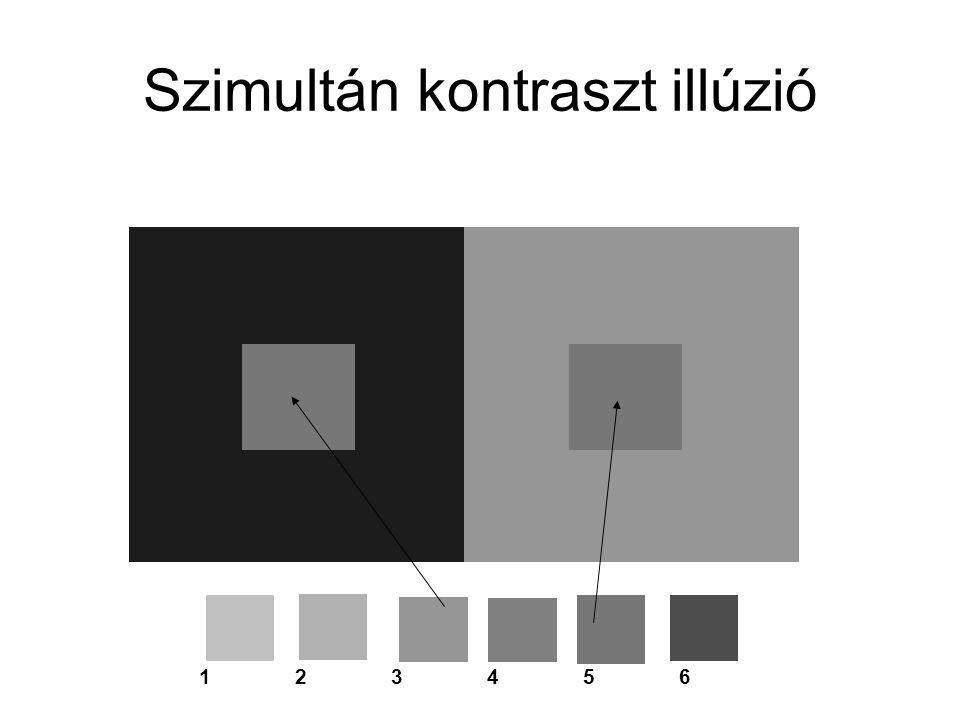 Szimultán kontraszt illúzió