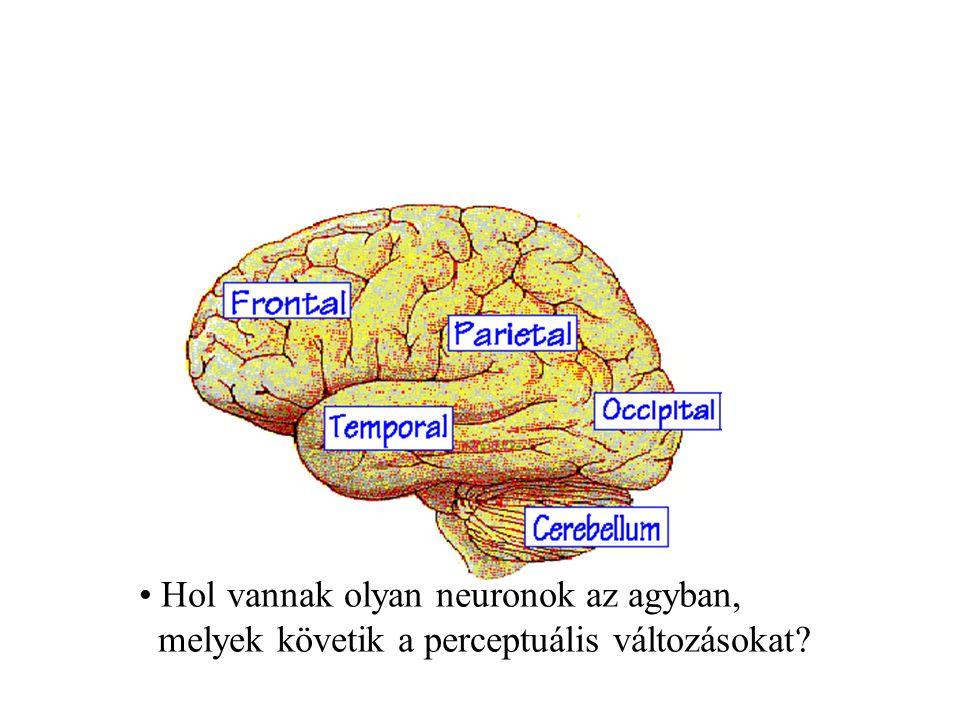 Hol vannak olyan neuronok az agyban,