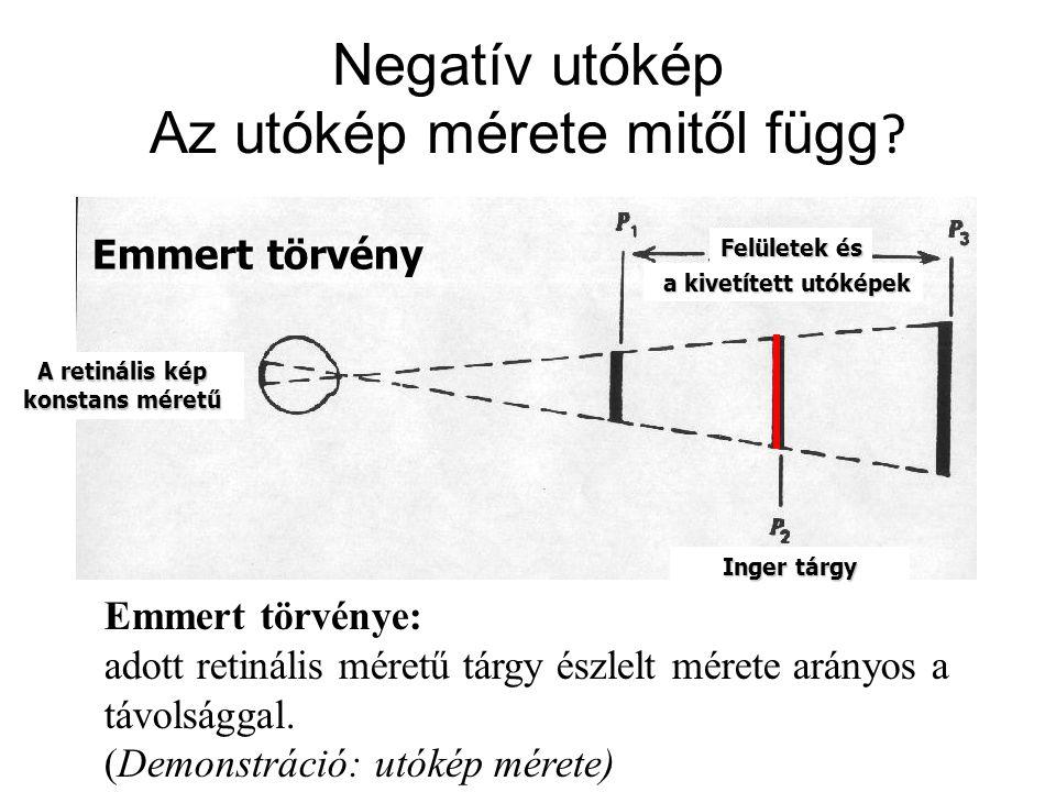 A retinális kép konstans méretű