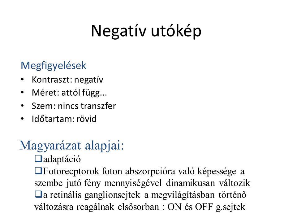 Negatív utókép Magyarázat alapjai: Megfigyelések Kontraszt: negatív