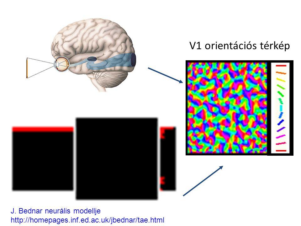 V1 orientációs térkép J. Bednar neurális modellje http://homepages.inf.ed.ac.uk/jbednar/tae.html