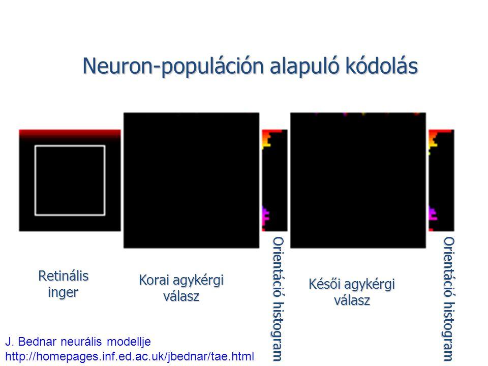 Neuron-populáción alapuló kódolás