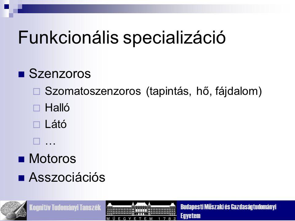 Funkcionális specializáció