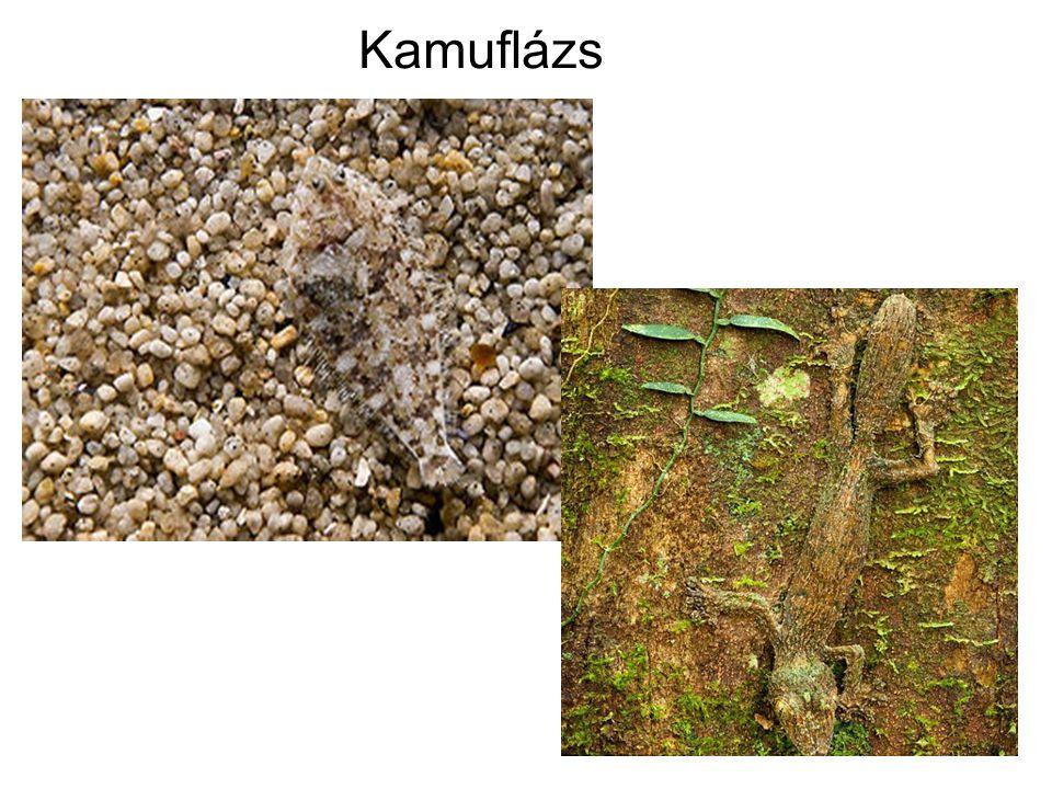Kamuflázs