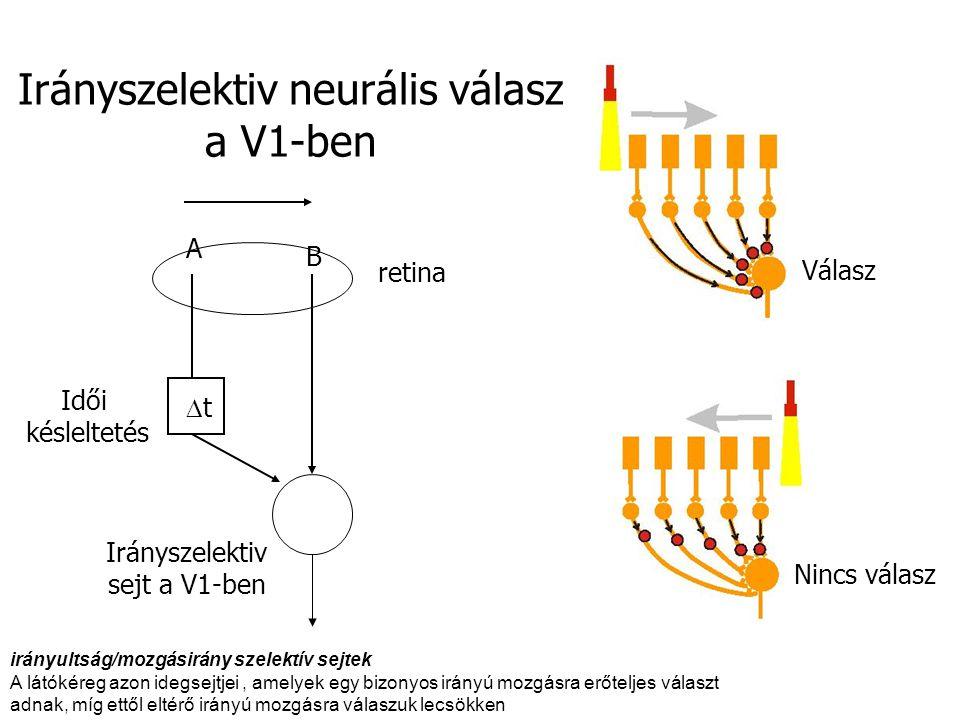 Irányszelektiv neurális válasz a V1-ben