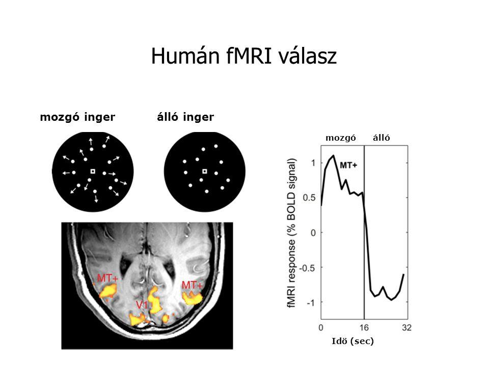 Humán fMRI válasz mozgó inger álló inger mozgó álló Idö (sec)