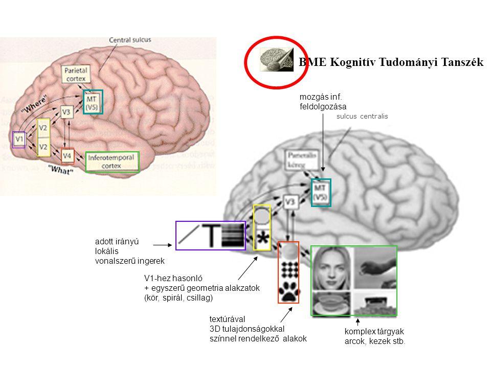 BME Kognitív Tudományi Tanszék