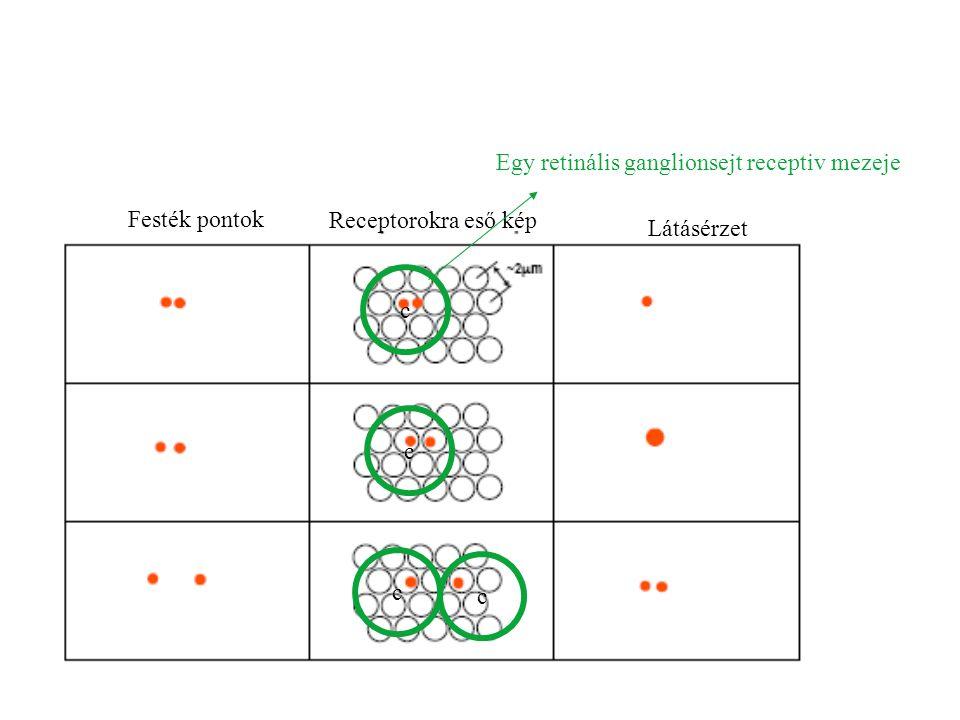 Egy retinális ganglionsejt receptiv mezeje